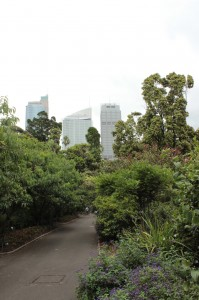 Un coin de verdure à coté des grandes tours du centre de Sydney