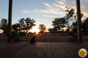 Lever de soleil au cottage
