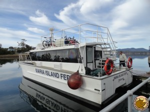 Le ferry vers Maria Island National Park