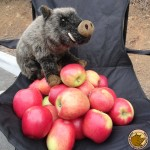 Elles sont pas belles nos pommes??