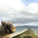 Bruny Island vue depuis Penguin Rookery
