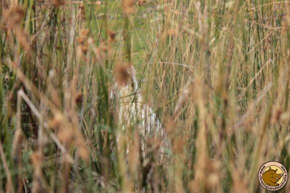 A votre avis qu'est-ce qui se cache dans l'herbe ?