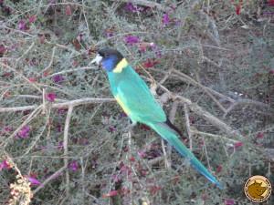 Un joli perroquet