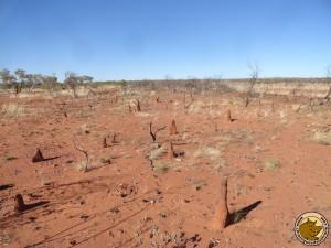 Des termitières à perte de vue