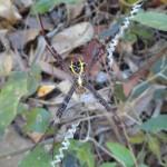 Une autre araignée inconnue