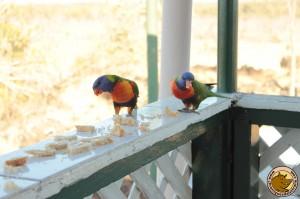 Des jolis perroquets