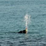 Lucie la baleine!
