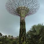 Singapour - Lucie au pied d'un des arbres de Garden By The Bay