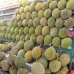 Singapour - un étal de durians